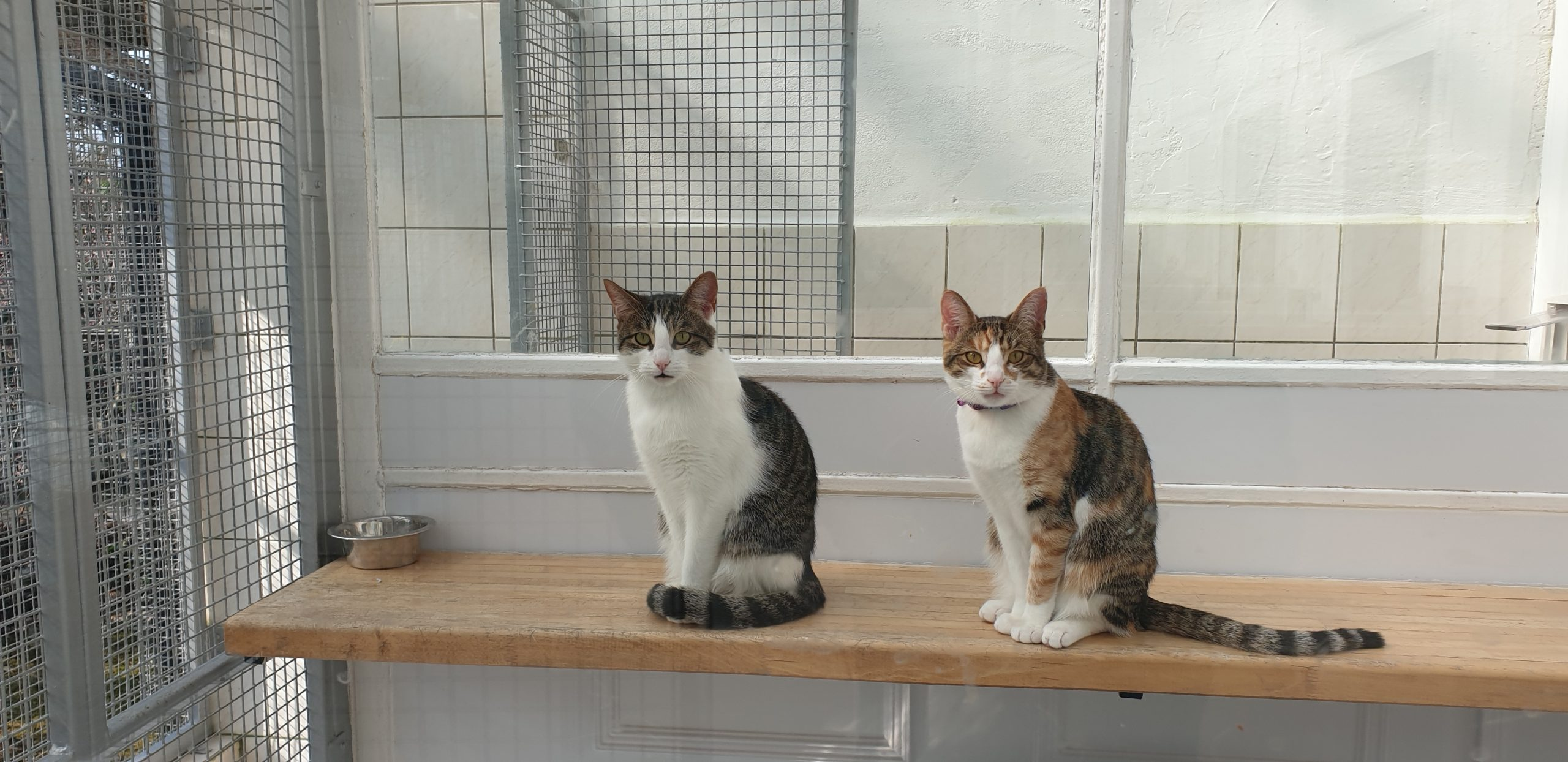 2 cats cattery 20190417_153212
