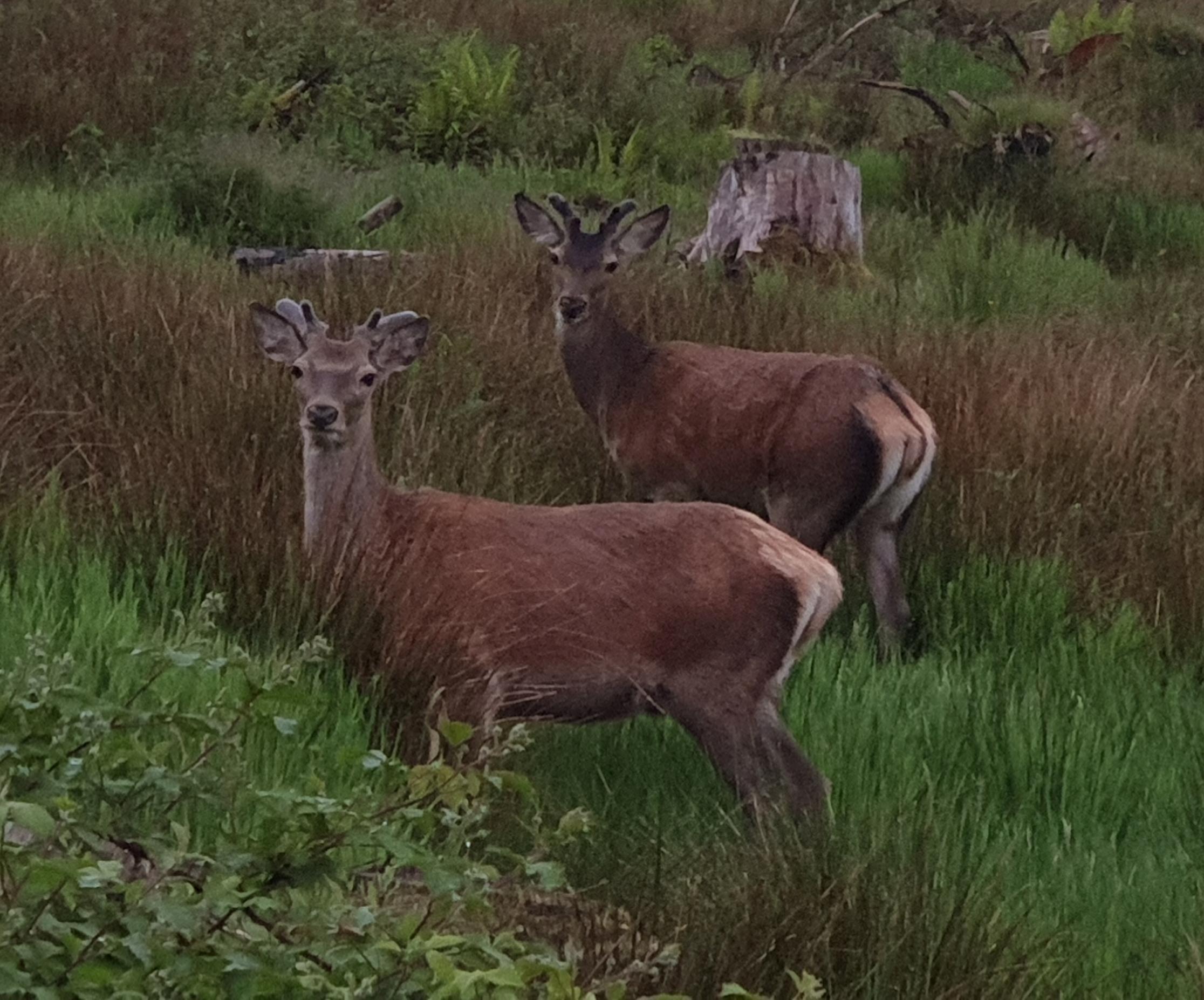 deer 20190604_212304