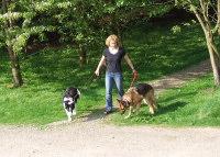 walkingdogs
